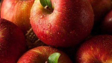 Photo of Recetas con manzanas